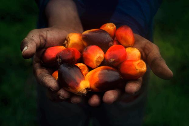 El origen natural del aceite de palma