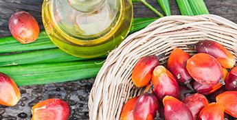 Encuentra aquí artículos relacionados sobre los beneficios del aceite de palma